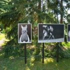 Festival La Gacilly-Baden Photo 2018