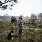 Entre chien et loup. Fabeln aus dem Morbihan