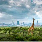Nairobi – Im Dschungel der Großstadt