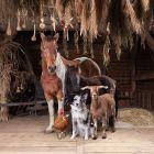 Parade der Bauernhoftiere