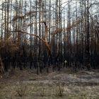 Osteuropa – Wälder des Widerstandes