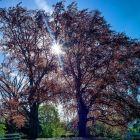 Die Bäume unserer Heimat